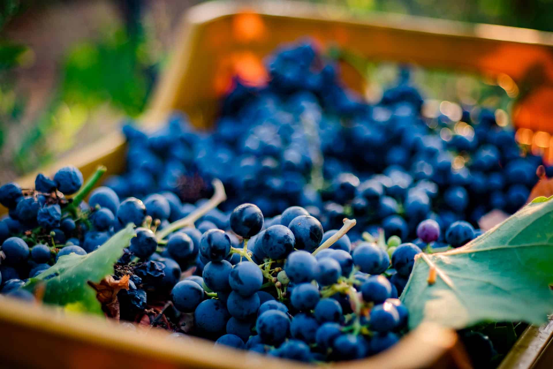 cassetta-uva-pugliese